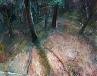 Galerie Im Wald, Acryl auf Lw, ca 120 x 100 cm, 2008.jpg anzeigen.