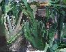 Galerie Palme und Kaktus abends.jpg anzeigen.