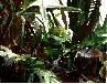 Galerie Pflanzen am Fenster.jpg anzeigen.